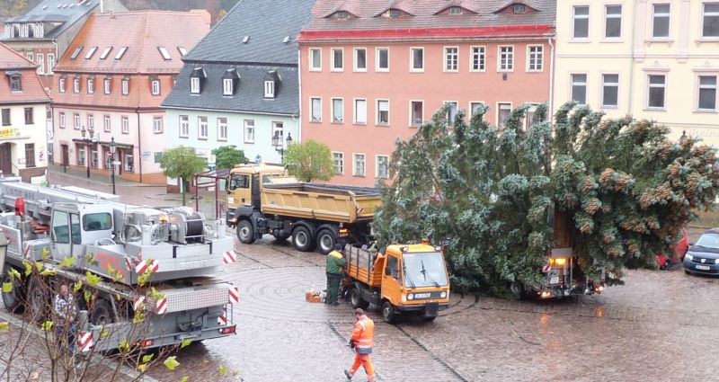 Weihnachtsbaum Markt 2017