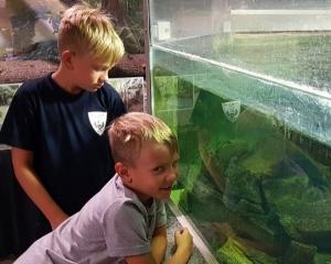 Neues Heim für Python und Boa präsentiert
